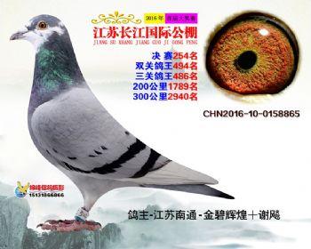 江苏长江决赛254名