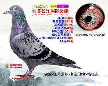 江苏长江决赛256名
