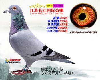江苏长江决赛264名