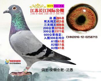 江苏长江决赛265名