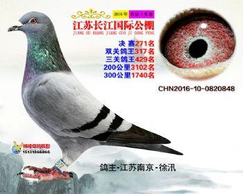 江苏长江决赛271名
