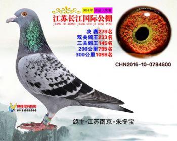 江苏长江决赛279名