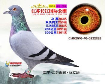 江苏长江决赛283名