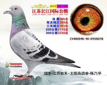 江苏长江决赛285名
