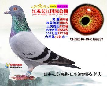 江苏长江决赛286名