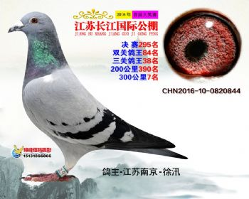 江苏长江决赛295名