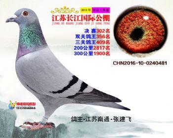 江苏长江决赛302名