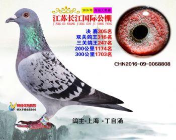 江苏长江决赛305名