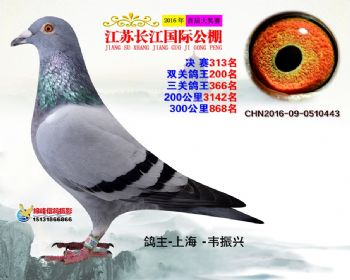 江苏长江决赛313名