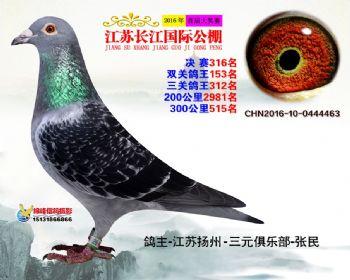 江苏长江决赛316名