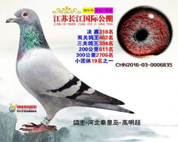江苏长江决赛318名