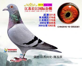 江苏长江决赛331名