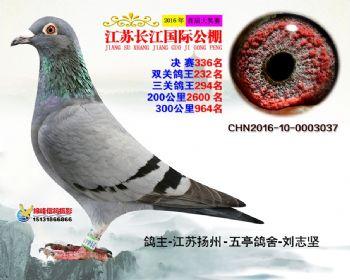江苏长江决赛336名