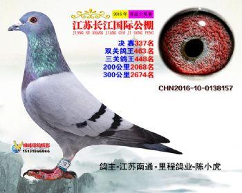 江苏长江决赛337名