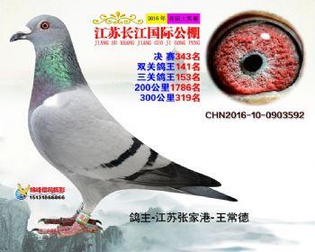 江苏长江决赛343名