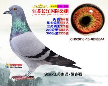 江苏长江决赛347名