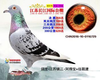 江苏长江决赛356名