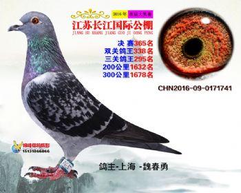 江苏长江决赛365名