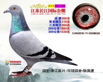 江苏长江决赛366名