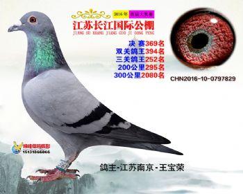 江苏长江决赛369名