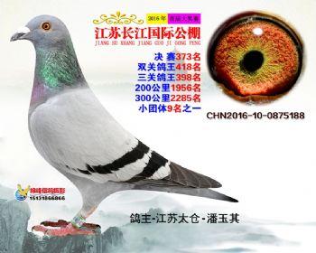 江苏长江决赛373名