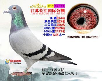 江苏长江决赛374名