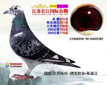江苏长江决赛375名