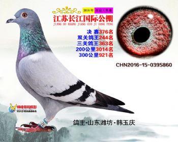 江苏长江决赛376名