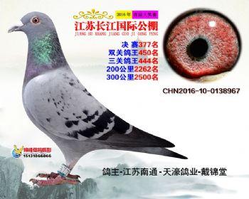 江苏长江决赛377名