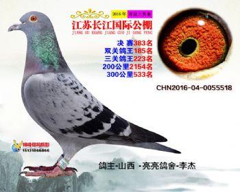 江苏长江决赛383名