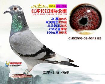 江苏长江决赛384名