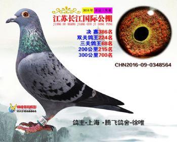 江苏长江决赛386名