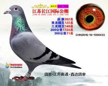 江苏长江决赛392名