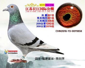 江苏长江决赛397名