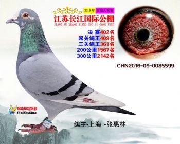 江苏长江决赛402名