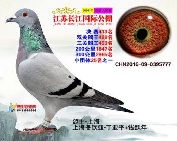 江苏长江决赛413名