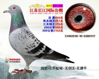 江苏长江决赛416名