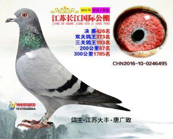 江苏长江决赛426名
