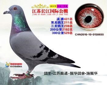 江苏长江决赛431名