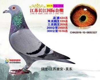 江苏长江决赛434名