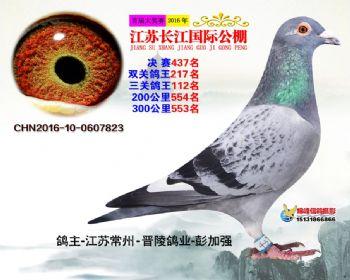 江苏长江决赛437名