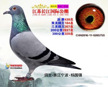 江苏长江决赛438名