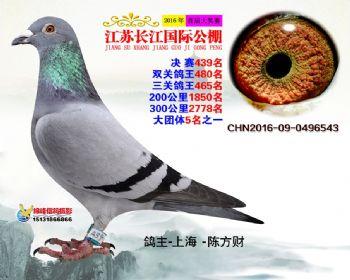 江苏长江决赛439名