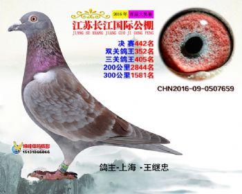 江苏长江决赛442名