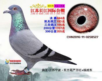 江苏长江决赛444名