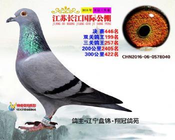 江苏长江决赛446名