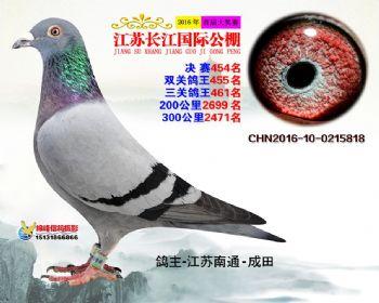 江苏长江决赛454名