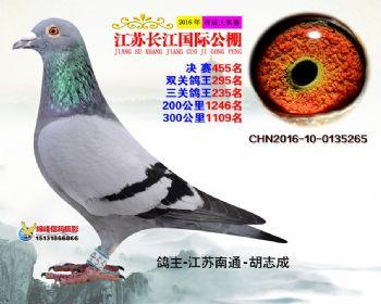 江苏长江决赛455名