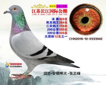 江苏长江决赛459名