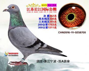 江苏长江决赛462名